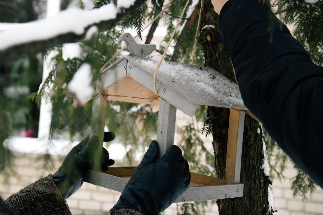 Акция «Кафе на дереве» в поддержку пернатых